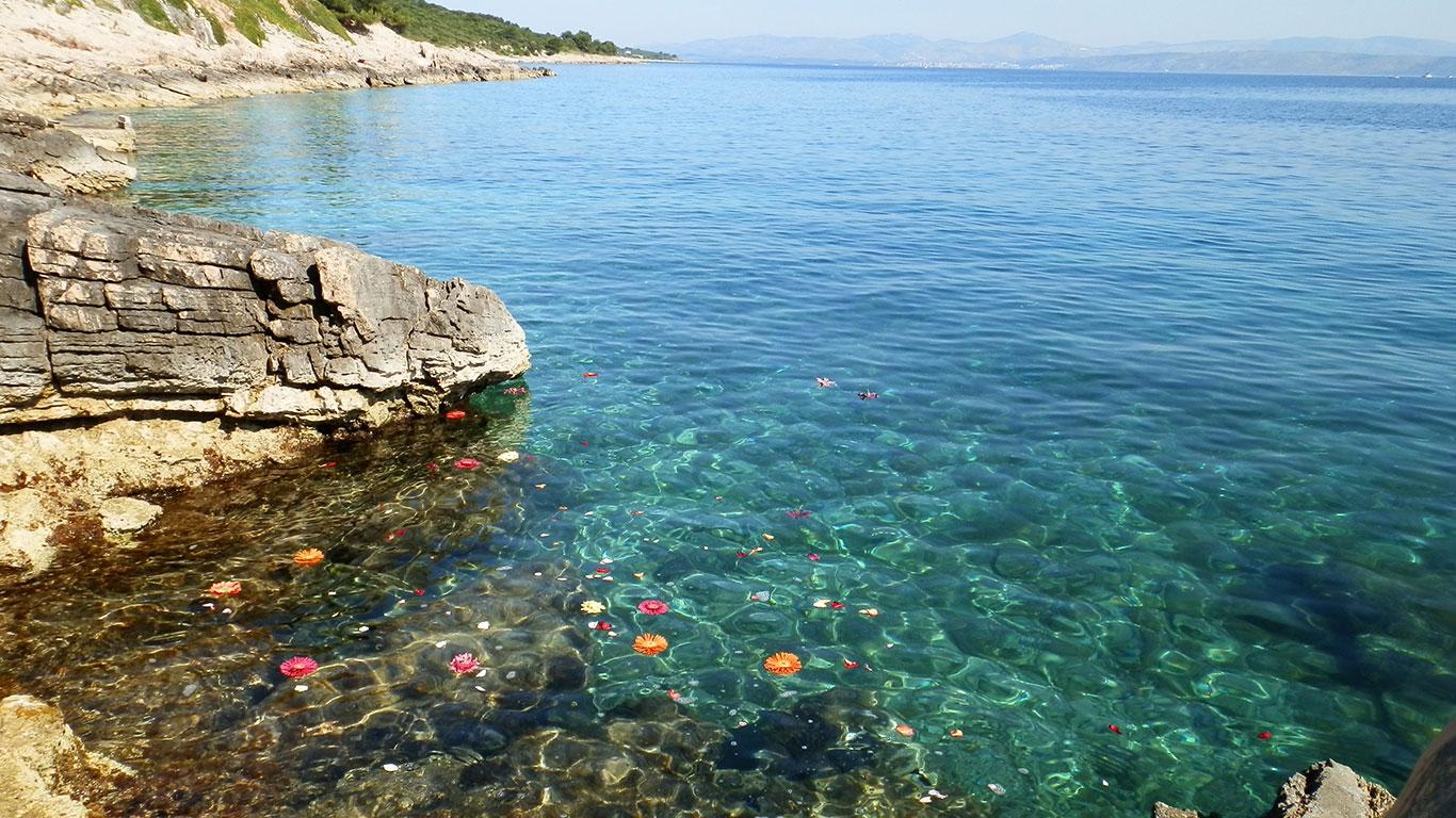 sea-croatia-flower